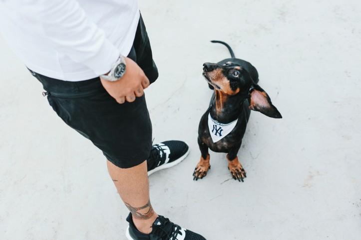 Streetwear Dog