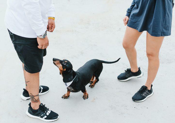 Streetwear Puppy